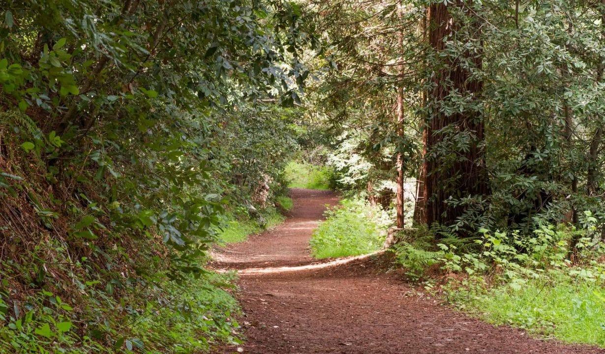 Byrne-Milliron Forest