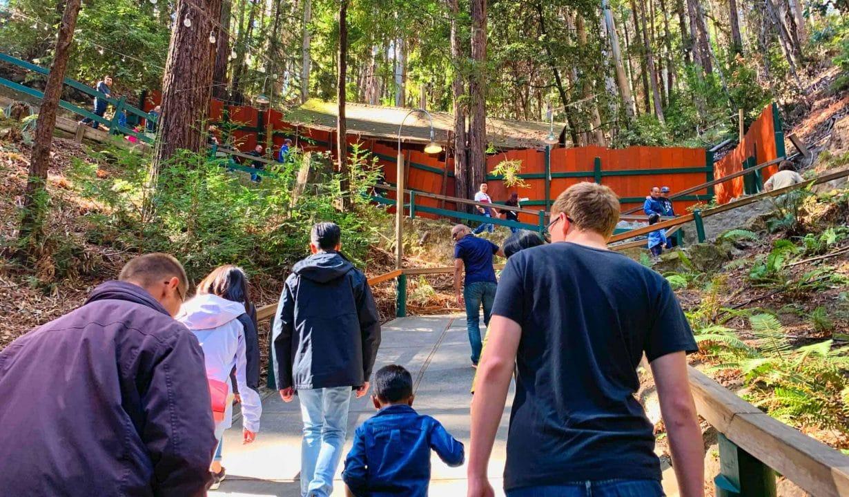 Mystery Spot walkway in the Santa Cruz Mountains