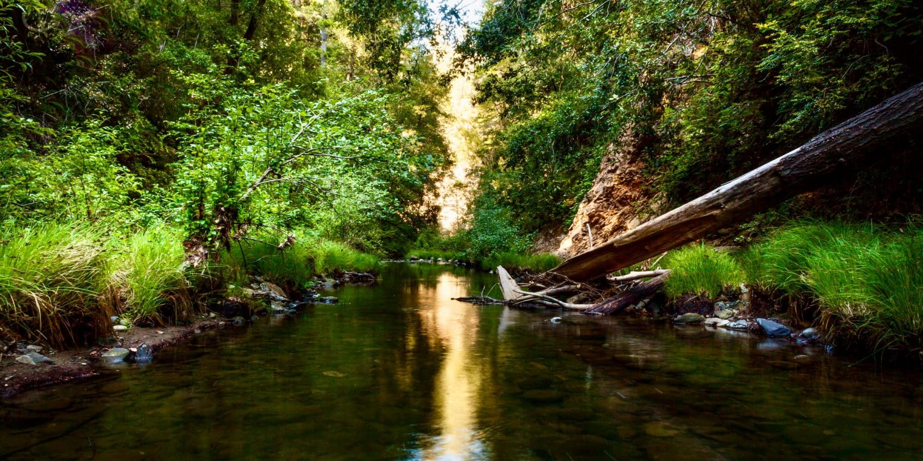 River at Portola Redwoods State Park