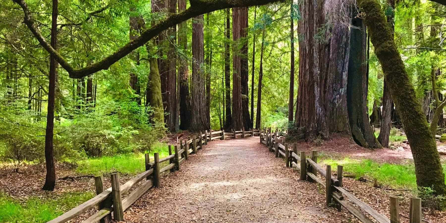 Path at Big Basin Redwoods State Park