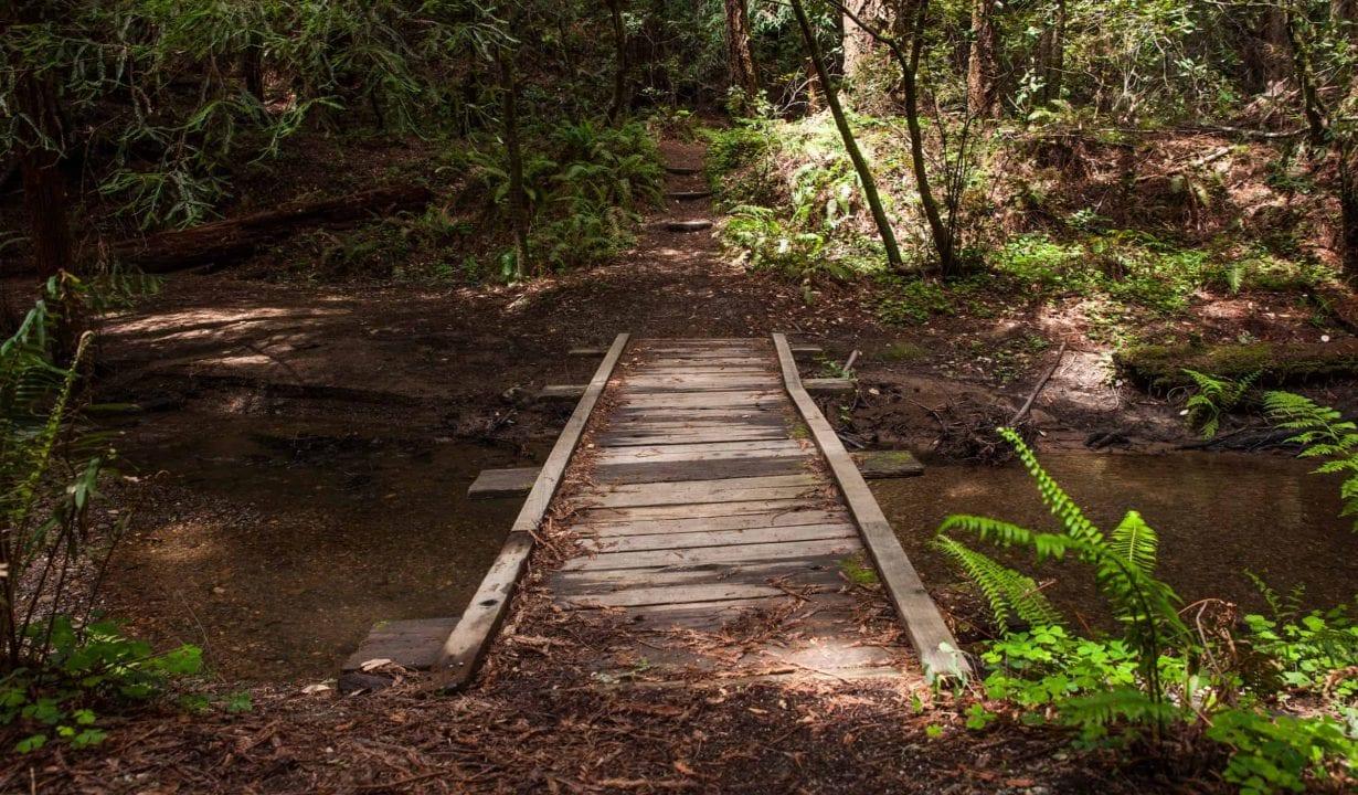 Bridge at Butano State Park