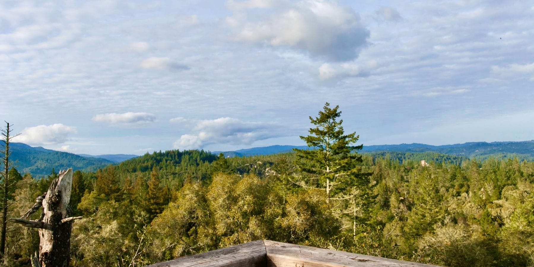 Observation Deck at Henry Cowell