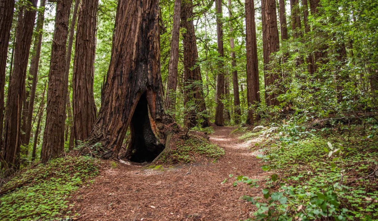 Trail at Butano State Park