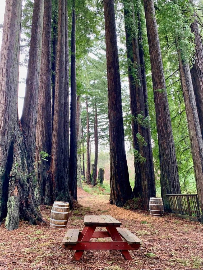 Redwoods at Beauregard Vineyards