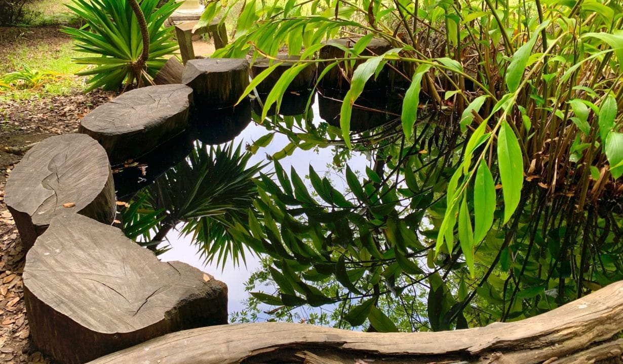 Land of Medicine Buddha Koi Pond