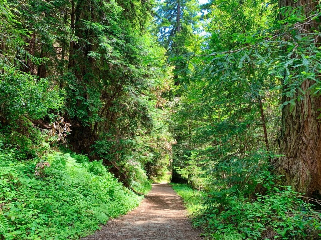 Land of Medicine Buddha Eight Verses Trail