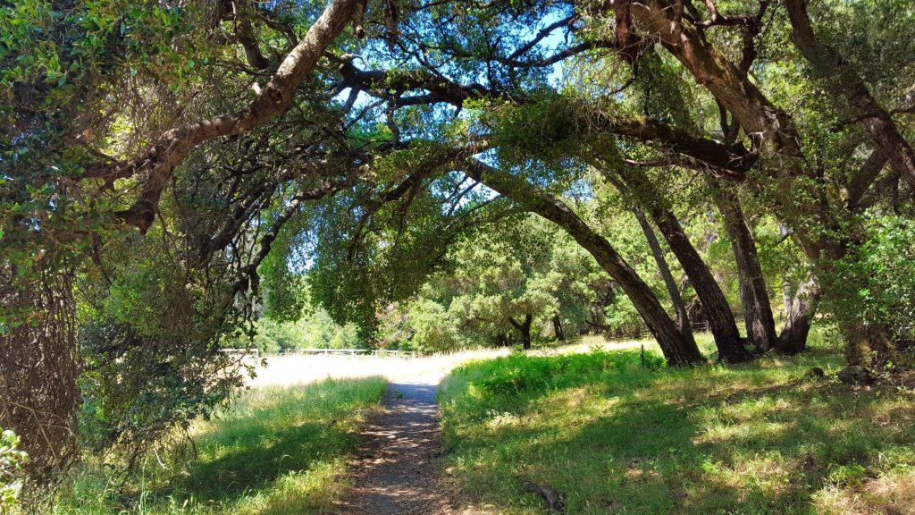 Trail at Quail Hollow